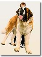 Quale cane portare a casa - Portare il cane al canile ...